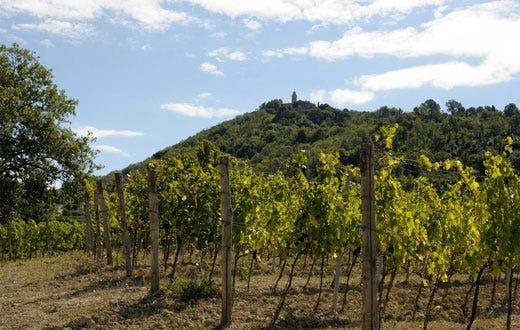 I vini intensi di fattoria del pino in assaggio al for Piani di fattoria sotto 2000 piedi quadrati
