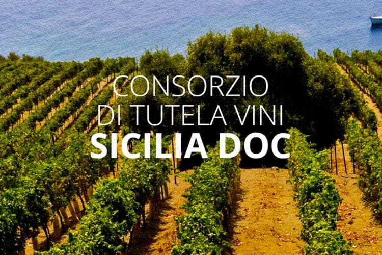 Vini Doc Sicilia, un successo boom di adesioni e incrementi notevoli
