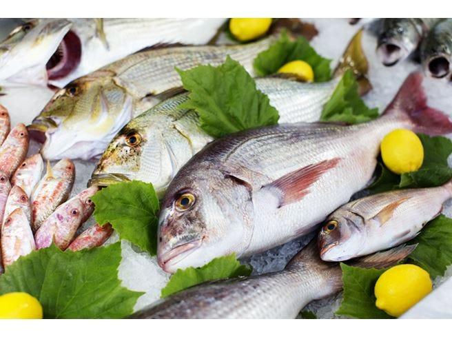 Adriatico, stop alla pesca Straniero l'80% del fresco