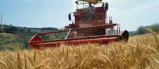 Grano, soia e mais alle stelle Prezzi su del 42% in un mese - Italia ...