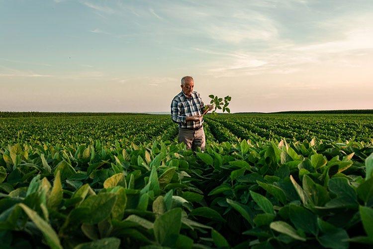 La transizione verde e la svolta green dell'Italia dipendono dall'agricoltura e dall'agroalimentare Transizione verde e agroalimentare Centinaio: Servono fondi adeguati