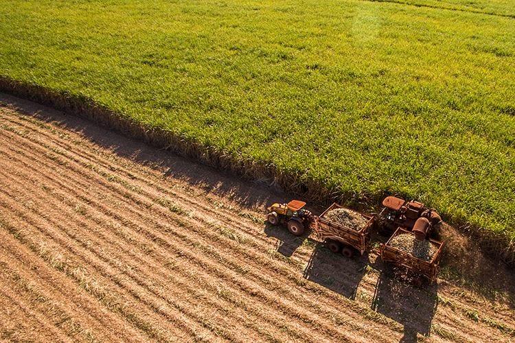 L'agricoltura torna a crescere Nel 2018 produzione su dello 0,6%