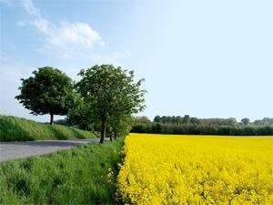 La Toscana tra le mete eco-friendly preferite dai vip di Hollywood