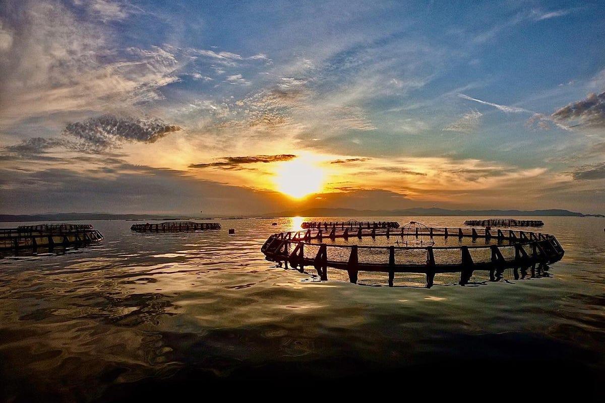 L'impianto offshore di Agroittica Toscana (Fonte: Facebook) Orata e branzino, qualità e tracciabilitàLa competizione estera non spaventa