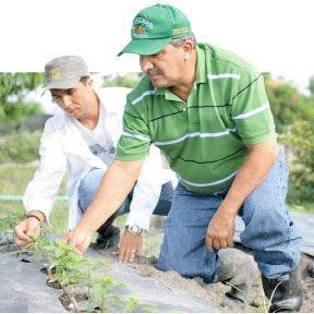 Dottori agronomi e forestali La professione del futuro