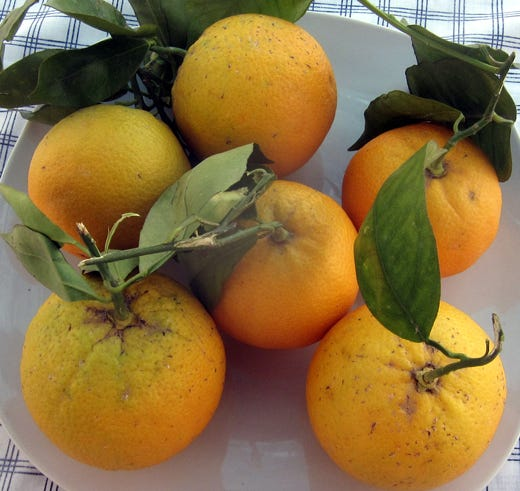 Frutta e verdura? Meglio italiane! Grazie alla rapidità delle spedizioni - Italia a Tavola