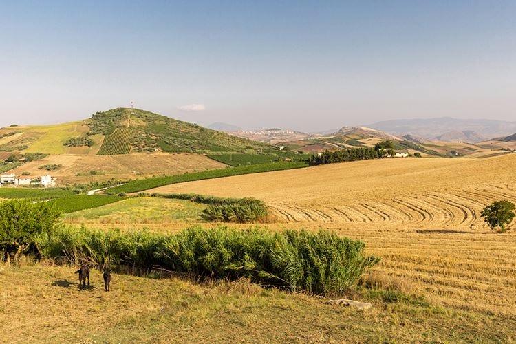 Alessandro di Camporeale Il Vino siciliano che emoziona