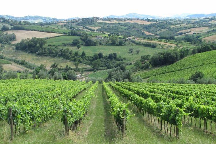 Alta Langa, le bollicine piemontesi si fanno largo in Lombardia