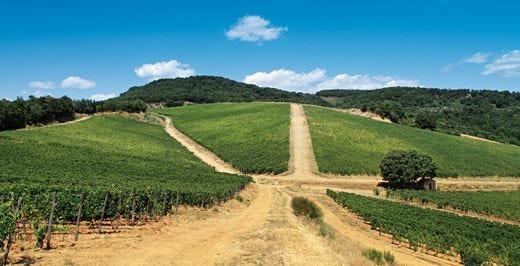 Andar per vigne in Toscana Viaggio dalla Maremma al Chianti
