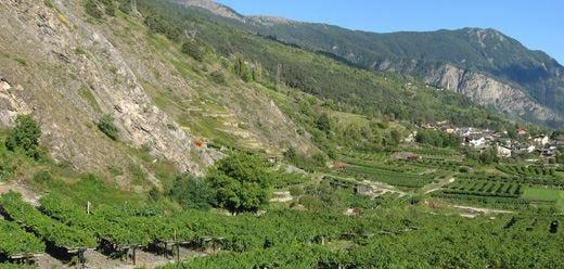 Cave des Onze Communes trionfaal 21° Concorso dei vini di montagna