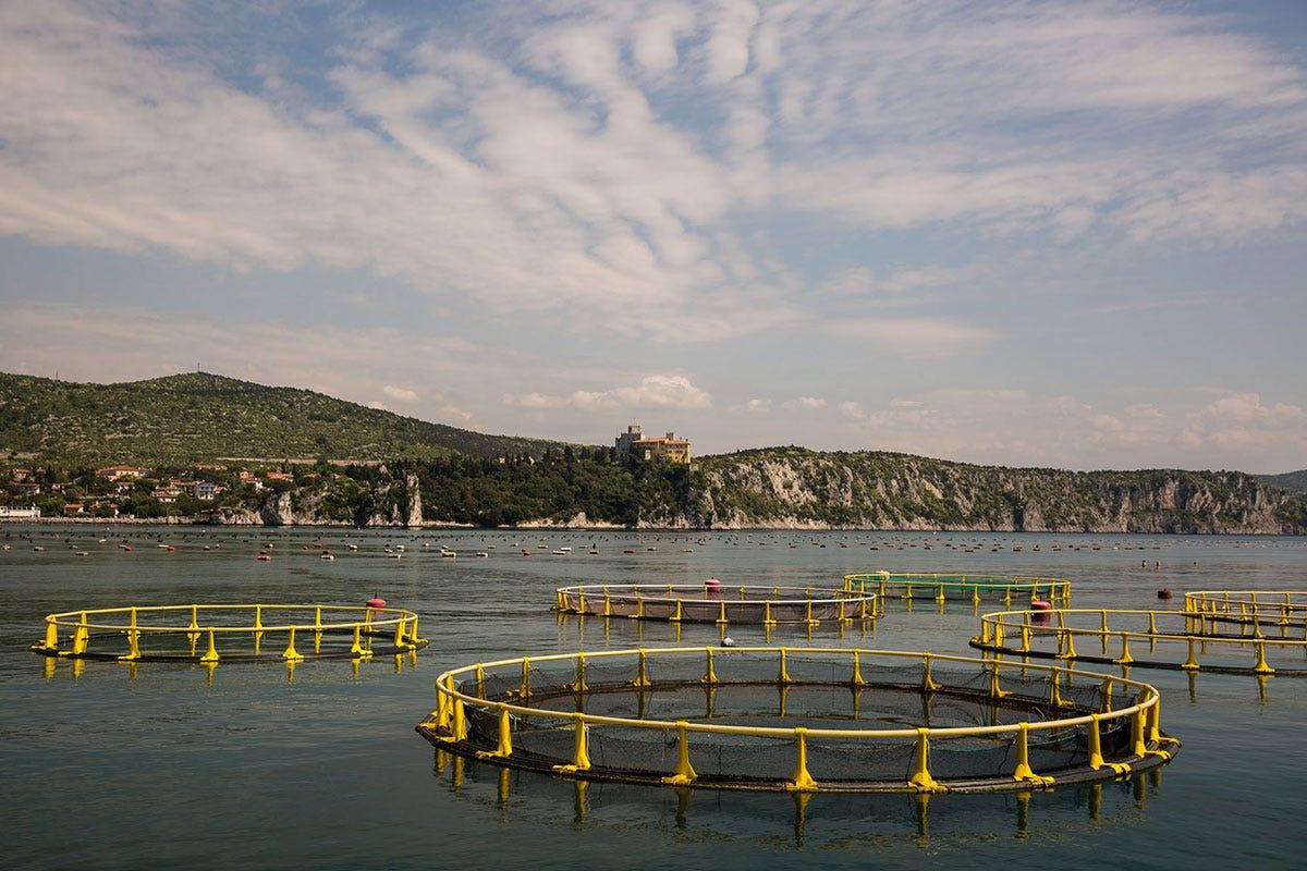 Allevameno di pesce in mare Pesce, meglio se Made in Italy La nuova spinta dei produttori