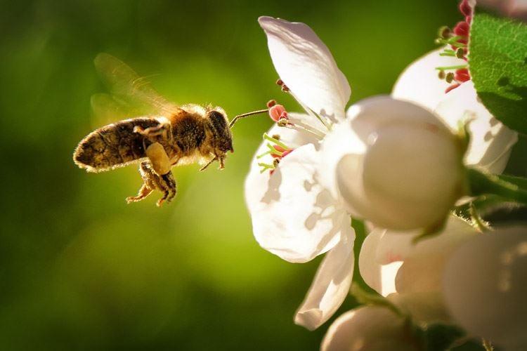 Cento ettari di fiori e piante per nutrire le api