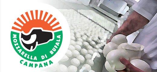 Riconfermato il Cda del Consorzio della Mozzarella di bufala campana Dop -  Italia a Tavola