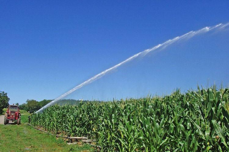 Caldo record, in Pianura padana a rischio il 30% del raccolto