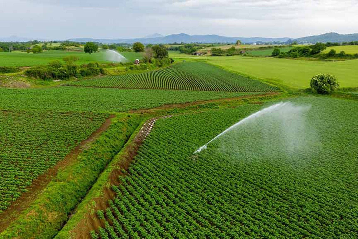 Il territorio produttivo abbraccia una decina di Comuni Patata dell'Alto Viterbese Igp Saporito interprete del territorio