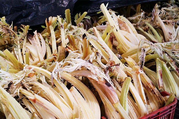 Il cardo avorio conservato nelle celle frigorifere - Il cardo avorio di Isola d'Asti Genuino e versatile in cucina
