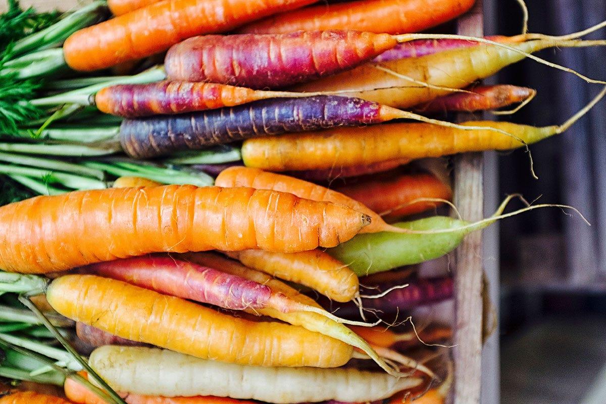Rosse, bianche, nere, viole e gialle: tutti i colori delle carote Le carote non sono tutte arancioni Il rilancio delle varietà antiche