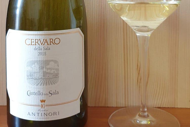 Ripartiamo dal vino Cervaro della Sala Antinori 2018