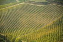 Nasce la carta contro l'erosione per un uso sostenibile del Chianti