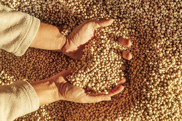Cina, +67% di import di soia Spinta per l'accordo sui dazi