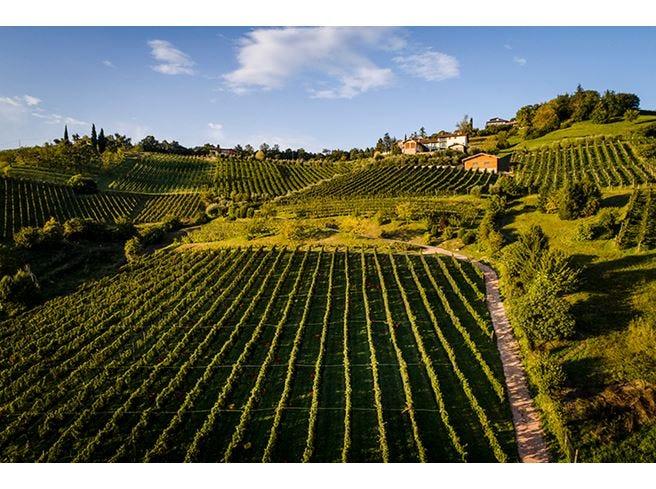 Il Cipresso, l'arte del vino fra tradizione e innovazione