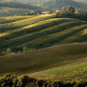 Consorzio Vino Chianti on tour Ora tocca a New York e San Francisco