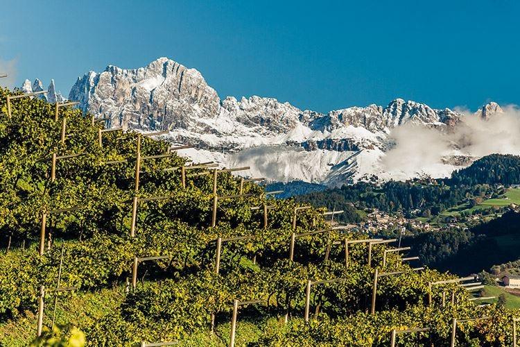 L'eccellenza dei Vini Alto Adige garantita dal marchio europeo