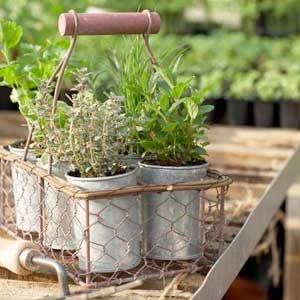Erbe aromatiche i mille profumi che fanno bene al piatto for Basilico in casa