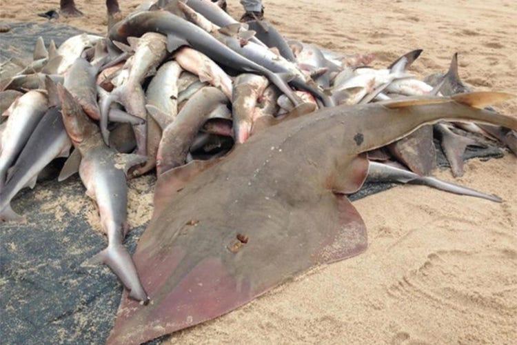 La pesca sul fiume Pechora