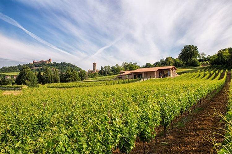 In Oltrepò il vino è amore e natura Così Finigeto protegge l'ambiente