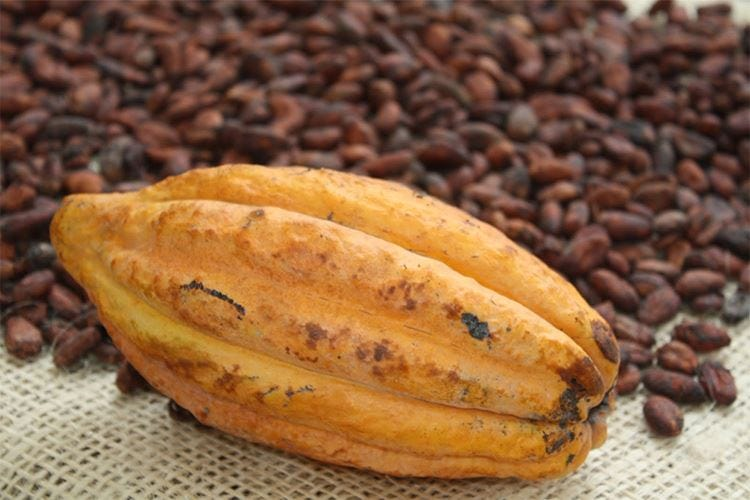 Conpait sceglie il Fino de Aroma per esclusive creazioni di cioccolato