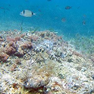 Greenpeace lancia un nuovo allarme: Il Mediterraneo soffoca e peggiora