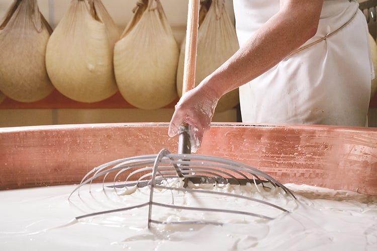 I distretti della filiera lattiero casearia sono cinque Piccole realtà casearie italiane: unite e certificate possono crescere