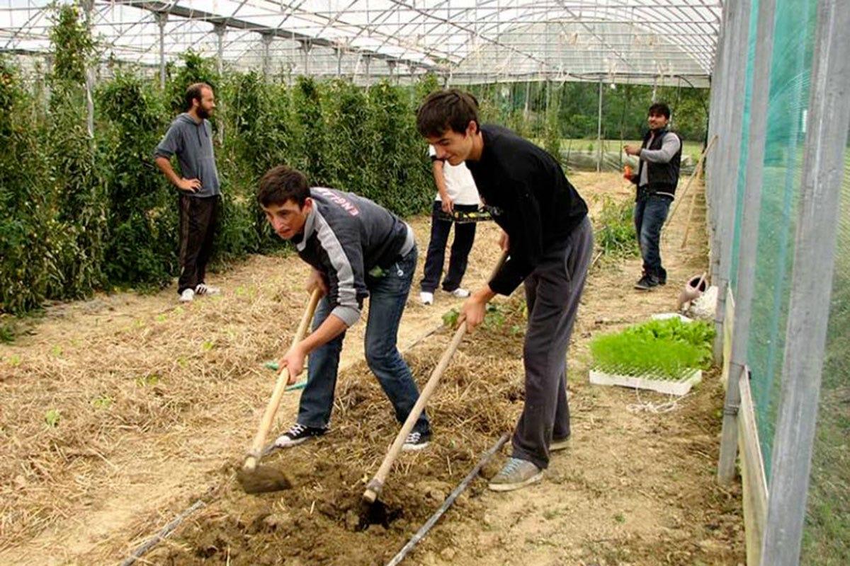 Alcuni dei ragazzi delle comunità al lavoro nelle serre Ragazzi fragili e agricoltura bio Tutti protetti dentro Forte Rossarol
