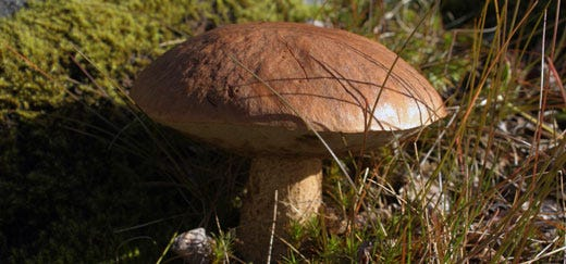 Sintomi di unghia di fungo