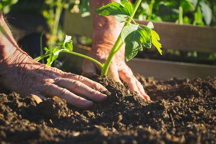 Giornata mondiale dell'ambiente Agroalimentare italiano il più green