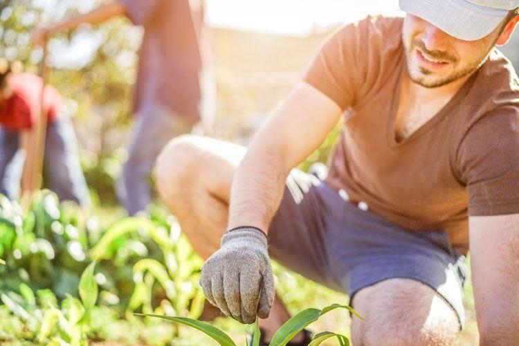 Giovani agricoltori crescono E la Lombardia li sostiene per 1,3 milioni