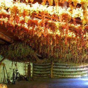 Degustazione di Vin Santo a Vicenza Una perla di passione e dedizione