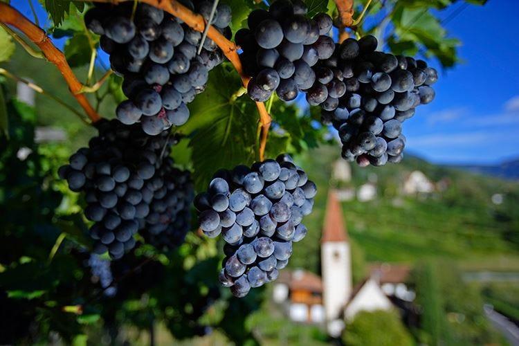 """Vacanze a tema """"wine"""" all'Hotel Terme Merano"""