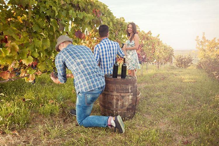 Vendemmia sui Colli tortonesiDue giorni dedicati ai wine lovers