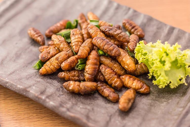 Liberi di mangiare ciò che si vuole Anche insetti - Italia a Tavola
