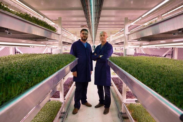 A Londra la verdura si coltiva sottoterra Tra i clienti anche ristoranti italiani