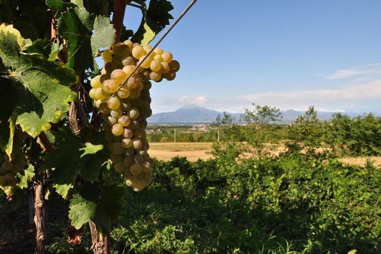 Lugana Doc in passerella alla Milano Wine Week