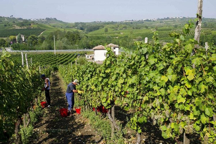Da Achilli a Cantina Manuelina La casa del Pinot Noir cambia nome