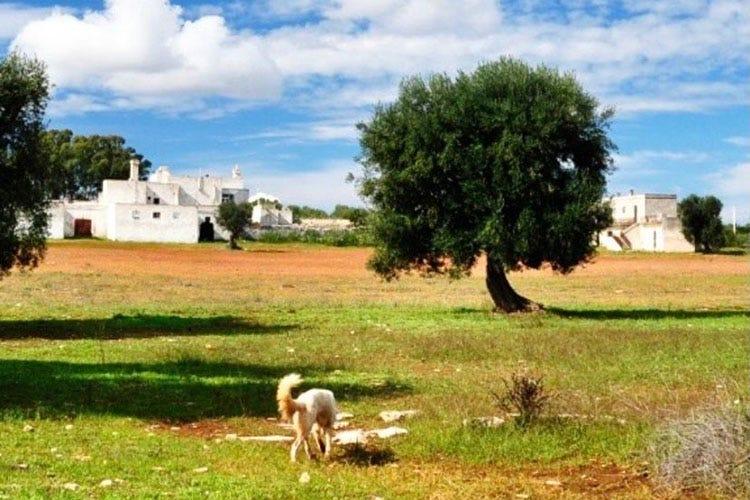 La masseria seicentesca di Francavilla Fontana I quattro vini di Borrega L'incarnazione della Puglia
