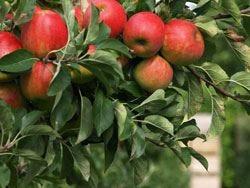 """Quando i distillati incontrano la frutta Dall'Anag un focus sulla """"mela"""""""