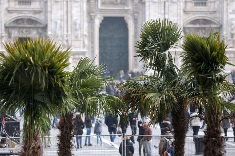 Milano, cercarsi sponsor per le palme di piazza Duomo