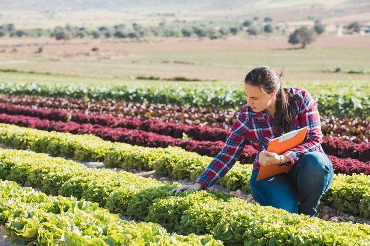 Il Ministero stanzia 500 milioni di euro per sostenere le filiere agroalimentari