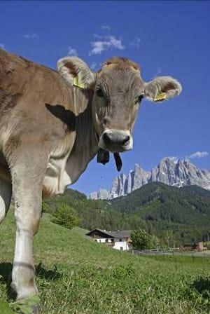 Vacanze in agriturismo Gallo Rosso 1500 paradisi naturali in Alto Adige