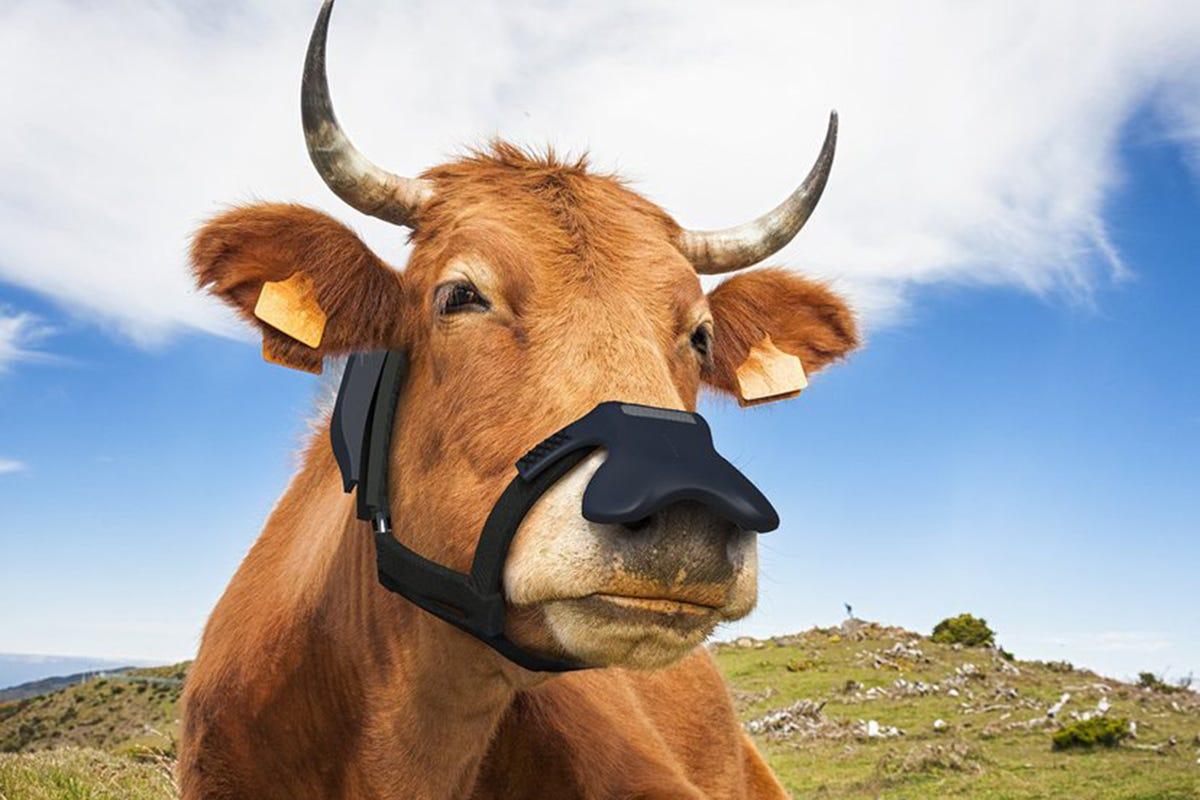 La maschera di Zelp Da Londra le maschere antigas per mucche che aiutano il Pianeta